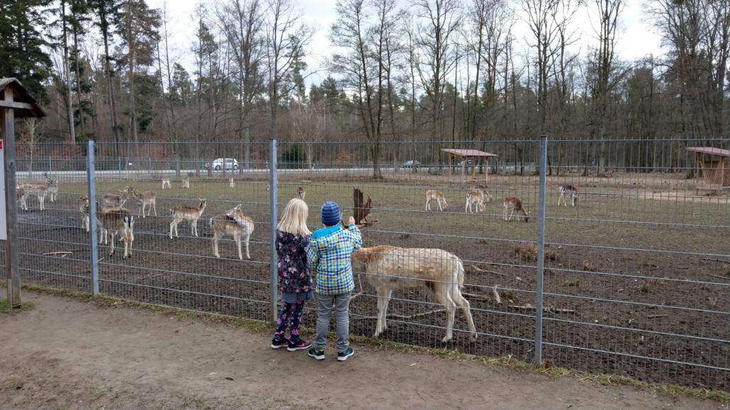 Damwild Freigehege Neunhof Tiere sind nah am Zaun 2