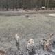 Blick über das weitläufige Wildgehege