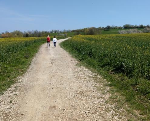 Kirschbluetenweg Kalchreuth Weg beim Sklavensee 1