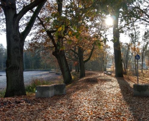 Valznerweiher herbstlicher Blätterwald