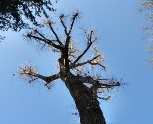 Walderlebnispfad am Valznerweiher geschnittener Baum mit blauen Himmel als Hintergrund